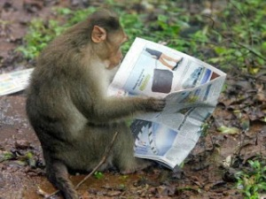 newspaper-monkey